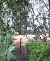 2 BHK Flat for Rent of 850 Sq.ft  in Tulip CHS Andheri West Mumbai by Robin Gangawane