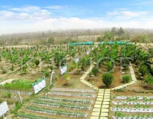 Ruia Agro Farm Manor
